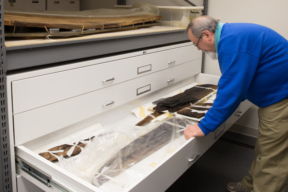 Flat File Cabinets - Museum Storage containing preserved artifacts at Historic St. Mary's City