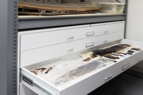 Oversized museum storage in flat storage drawers at Historic St. Mary's City